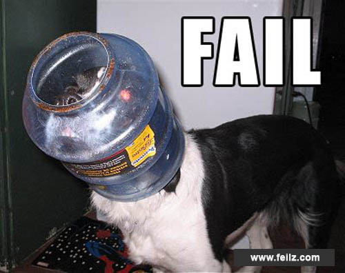 Stupid Pictures Of Dogs